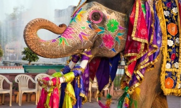 Holi-Celebration-in-Udaipur (1)
